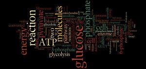 glycolysis wordle