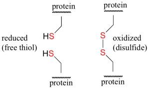http://chemwiki.ucdavis.edu/Organic_Chemistry/Organic_Chemistry_With_a_Biological_Emphasis/Chapter_16%3A_Oxidation_and_reduction_reactions/Section_16.12%3A_Redox_reactions_involving_thiols_and_disulfides?highlight=thiol