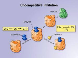 http://aspiringbiochemist2017.wordpress.com/2013/03/18/the-basics-of-enzyme-inhibition/