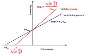 http://xnet.rrc.mb.ca/davidb/enzymes.htm